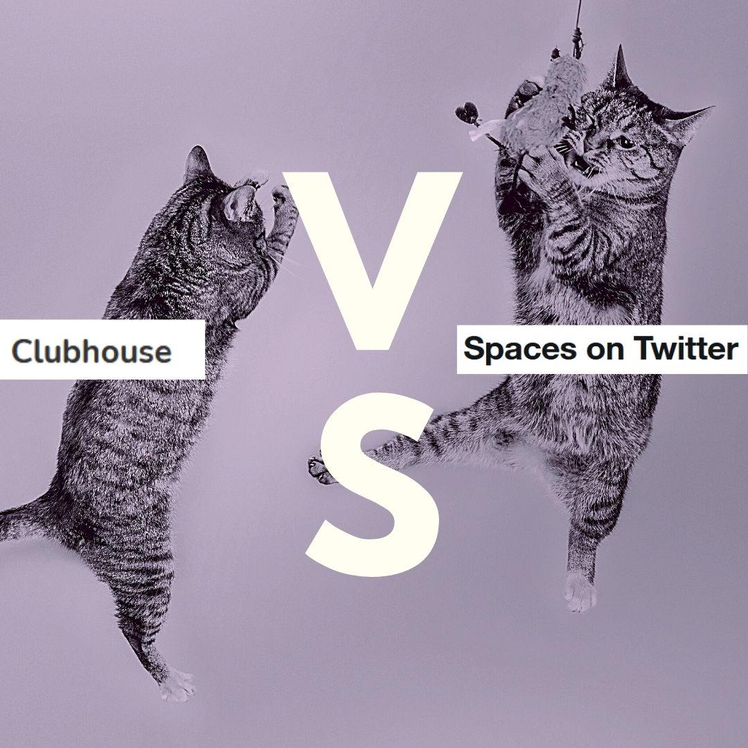 Clubhouse vs Spaces - der Vergleich. Im Bild kämpfen zwei Katzen um den Titel